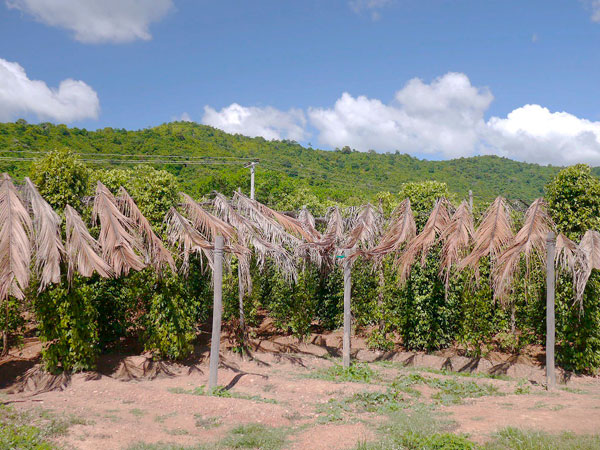 Pepper Farm